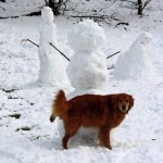 snowmans best friend